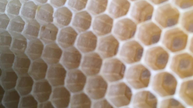 きっと誰かに話したくなる「ミツバチの巣」のはなし