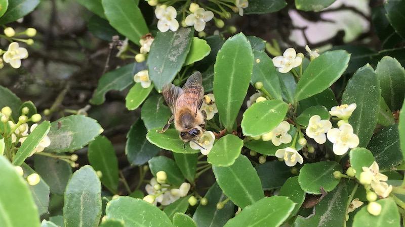 庭にある蜜源植物のはなし