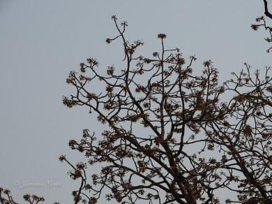 Mahout Tree
