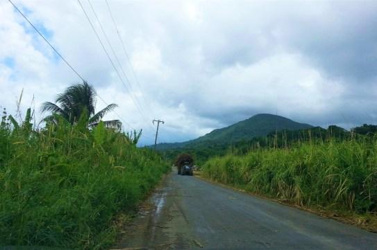 Zuckerrohrfelder
