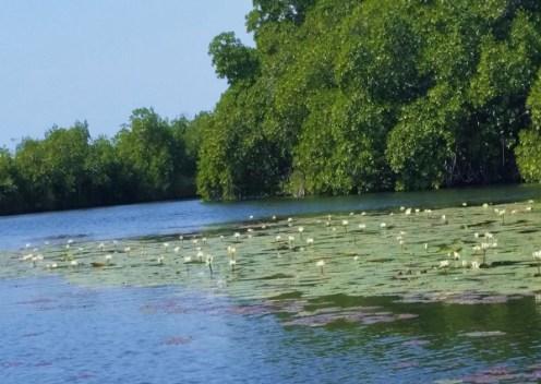 Black River Krokodil Safari