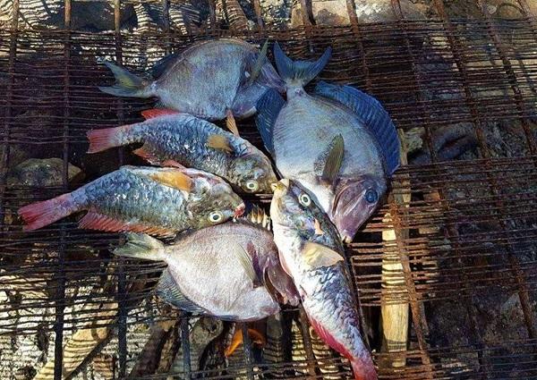 Verschiedene karibische Fische
