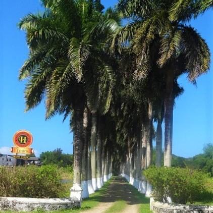 Rum Tour Jamaika