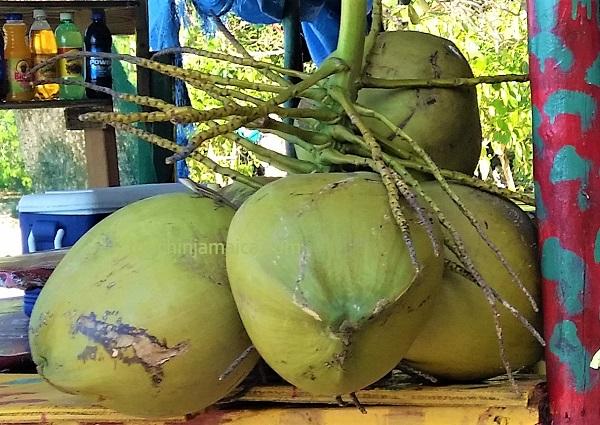 Grüne-Kokosnüsse auf Jamaika