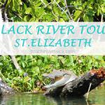 Black River Tour Jamaika - Krokodil-Safari