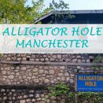 Allligator Hole Manatees Jamaika