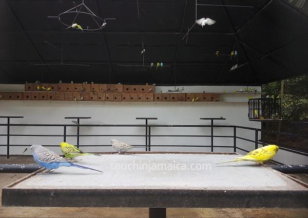Bei den Konoko Falls and Park gibt es eine Freiflugvliere, wo man an bestimmten Zeiten Wellensittiche füttern kann.