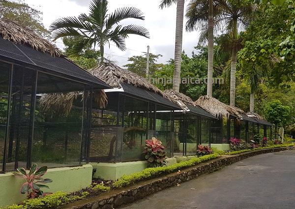 Bei den Konoko Falls and Park gibt es einen kleinen Tierpark mit teils endemischen Arten, die auf Jamaika fast ausgestorben sind.