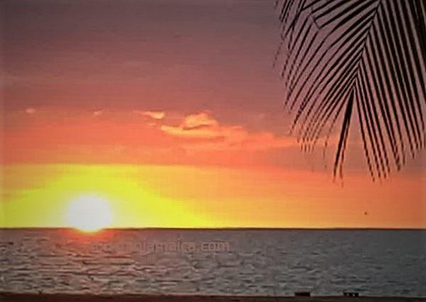 Sunset Parottee