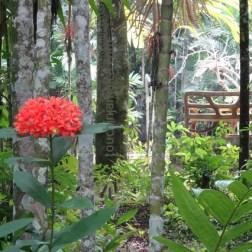 Botanischer Garten auf Jamaika