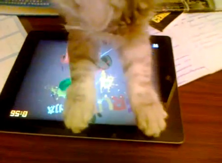 cat_playinig_fruit_ninja_1.jpg