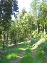 Hammer Run Bayreuth 2015, Strecke Wald
