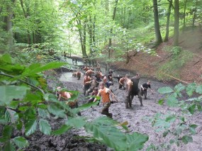 Tough Mudder NRW 2015, Hindernis Mud Mile 3