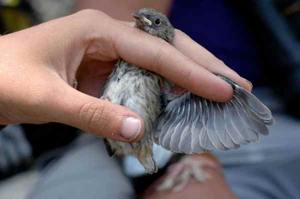 The sky is falling: birds and hail | Tough Little Birds