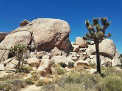 desert en californie