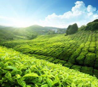 أجمل الأماكن السياحية في ماليزيا وأكثرها زيارة
