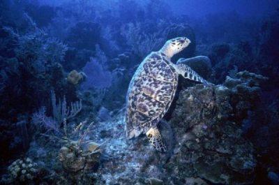 جزر السلاحف ولاية صباح ماليزيا 8