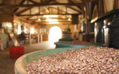 زيارة مصنع القهوة في جزيرة بينانج