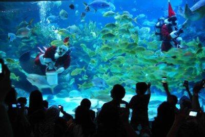 عالم ما تحت الماء