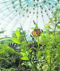 Kuala-Lumpur-Lake-Gardens-Park-Butterfly-Park