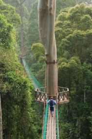 Rainforest-Canopy-Walkway-2