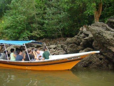 mangrove-boat