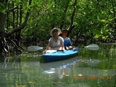 mangrove-kayak-trip-6-640