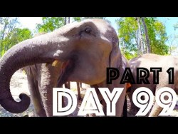 Elephant Sanctuary Thailand | Day 99