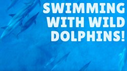SWIMMING WITH DOLPHINS + CASELA WORLD OF ADVENTURES