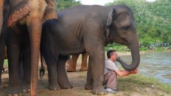 The Elephant Whisperer – Man and Elephant are Best Friends