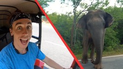 DRIVING next to a WILD ELEPHANT in Sri Lanka
