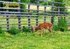 Буки_міні-зоопарк
