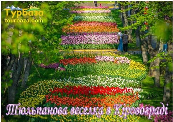 Тюльпанова_веселка_в_Кіровограді