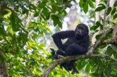Gorilla Safari Congo Adventure to Virunga & Mount Nyiragongo Climbing