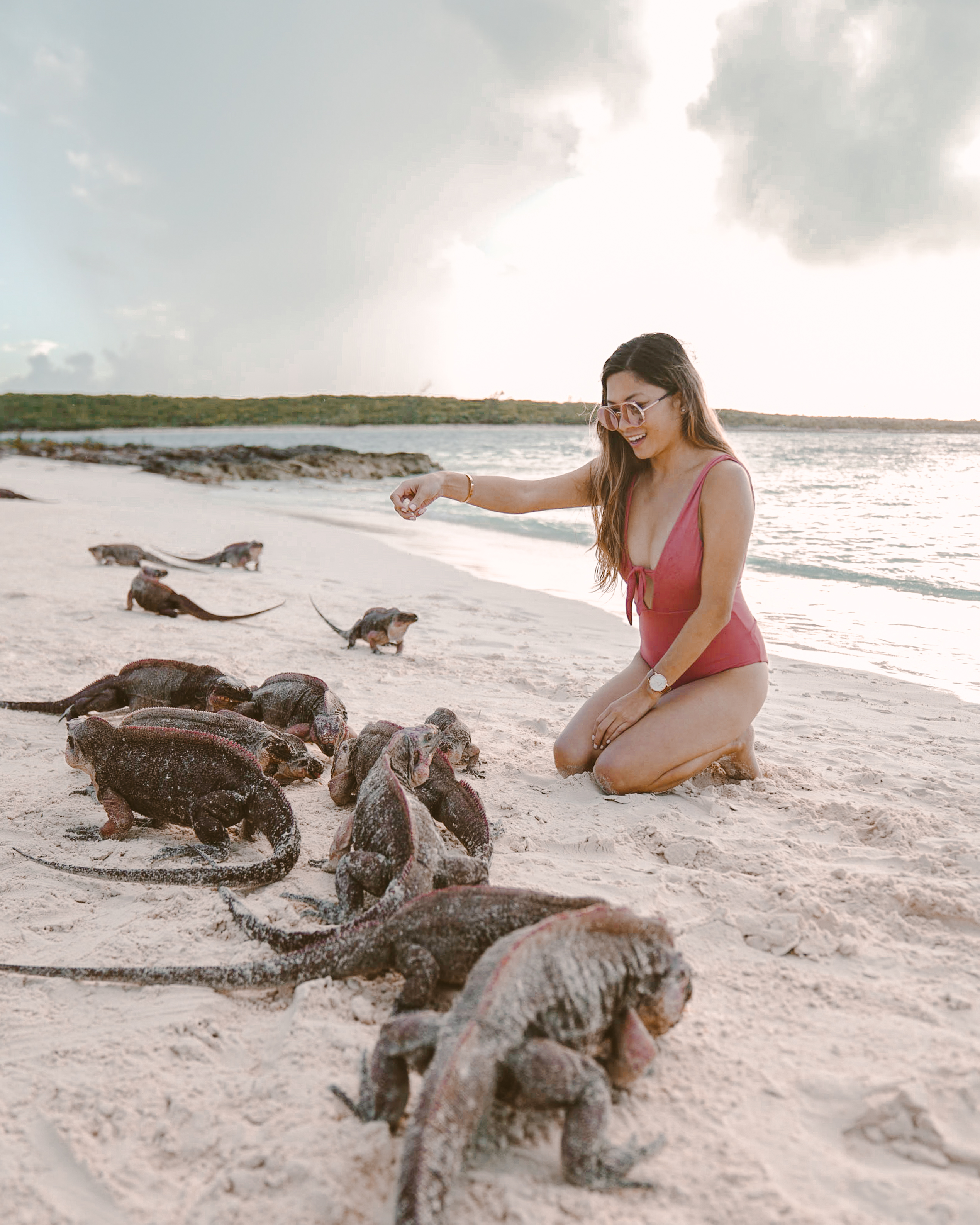Bucket list experiences in Exuma - iguanas