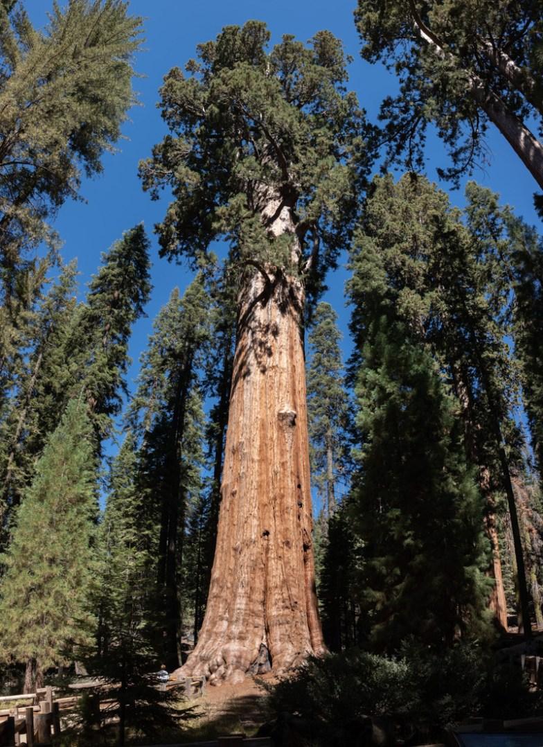 2018-09-20 - Sequoia Park-3