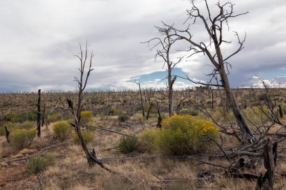 2018-09-O5 - Mesa Verde-9
