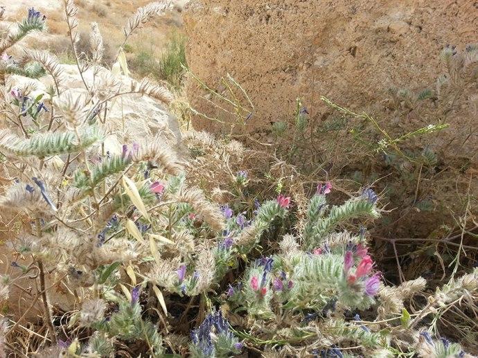 wildflowers in Israel
