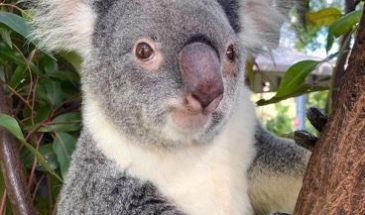 tourism-guide-Australia-Currumbin-wildlife-sanctuary