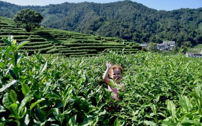 Longjing Tea Plantation: Everything you need to know for the perfect visit