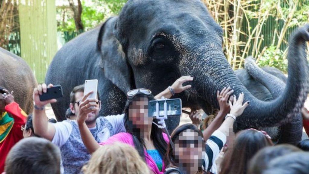 unethical elephant sanctuaries in Thailand