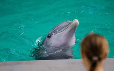 6 reasons why you should NEVER swim with dolphins