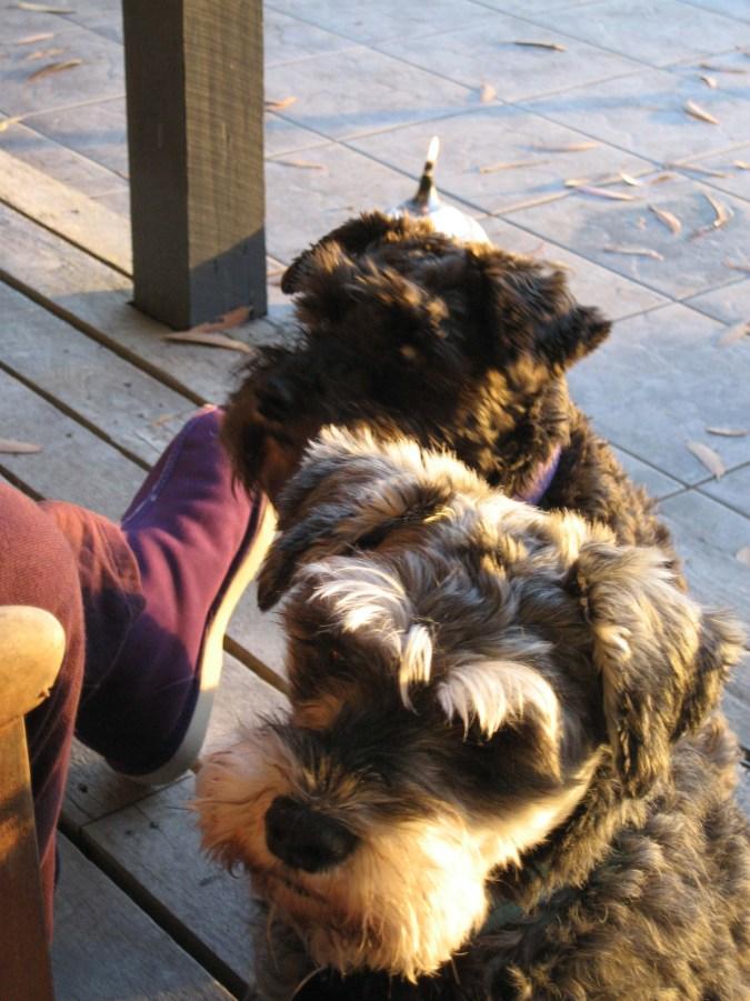 ravenous-dogs.jpg