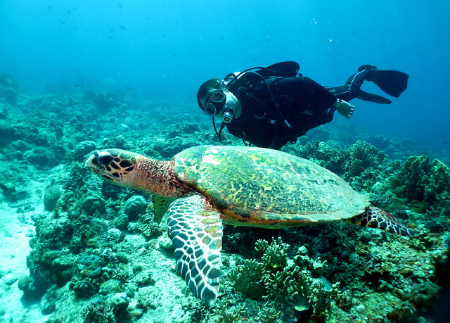 Best Dive Sites in the Philippines