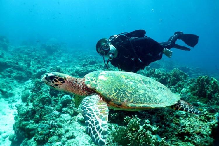Apo Reef - Top 10 Beaches in the Philippines