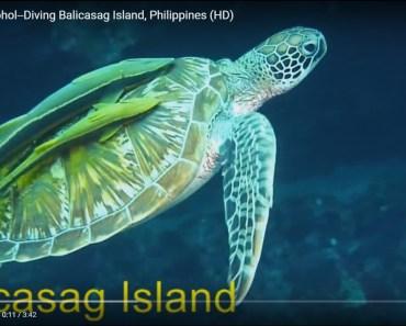 Balicasag Island Bohol