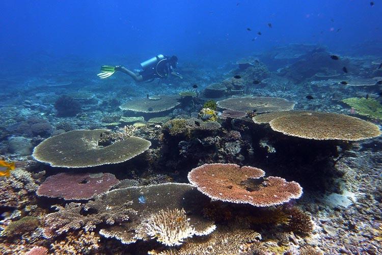 Honda Bay Diving