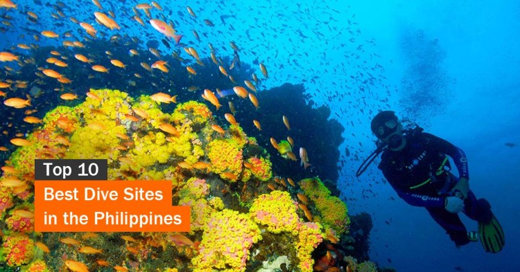Top 10 Best Dive Sites in the Philippines