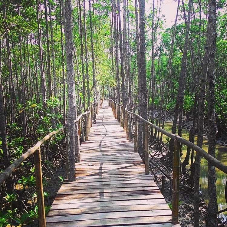 5. Bakhawan Eco Park Aklan