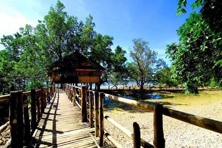 6. Pagatpat Mangrove Park